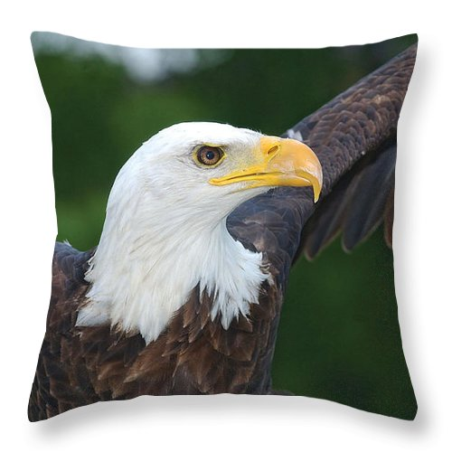 Eagle Throw Pillow featuring the photograph Bald Eagle Close Up by Steve Somerville