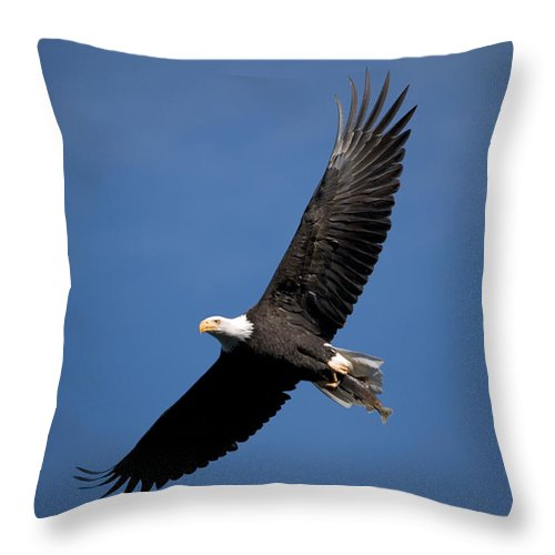 Bald Eagle Throw Pillow featuring the photograph Bald Eagle I by Randall Ingalls