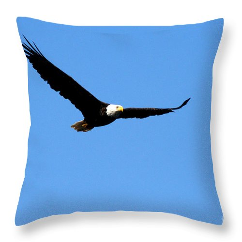 Eagle Throw Pillow featuring the photograph Bald Eagle II by Thomas Marchessault