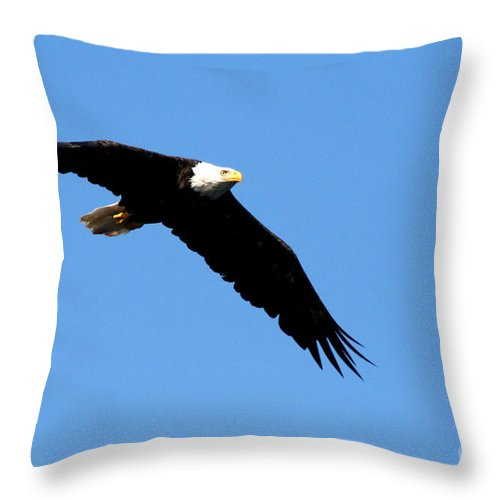Eagle Throw Pillow featuring the photograph Bald Eagle IIi by Thomas Marchessault