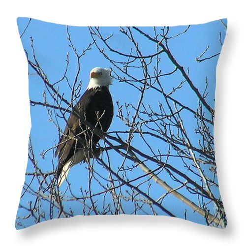 Bald Throw Pillow featuring the photograph Bald Eagle by Louise Magno