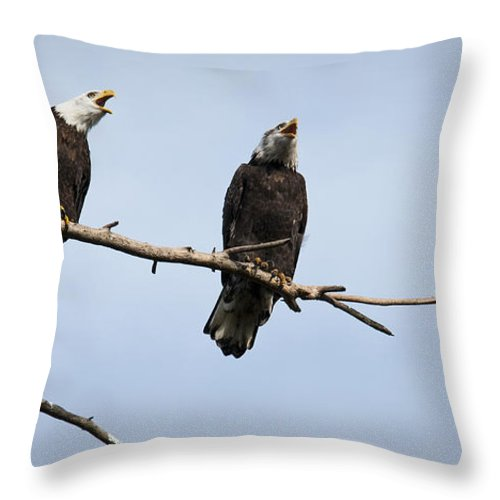 Bald Eagle Throw Pillow featuring the photograph Bald Eagle Music by Chad Davis