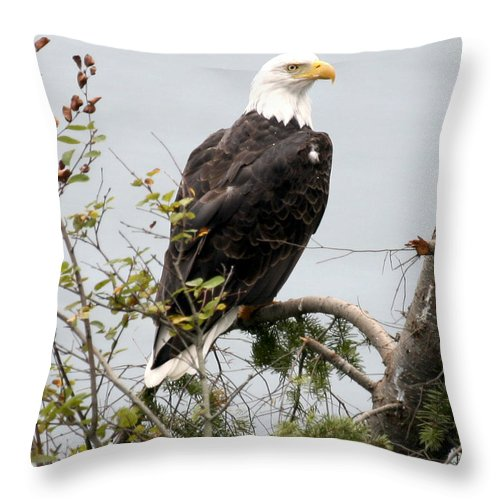 Eagle Throw Pillow featuring the photograph Bald Eagle Nw3038 by Mary Gaines