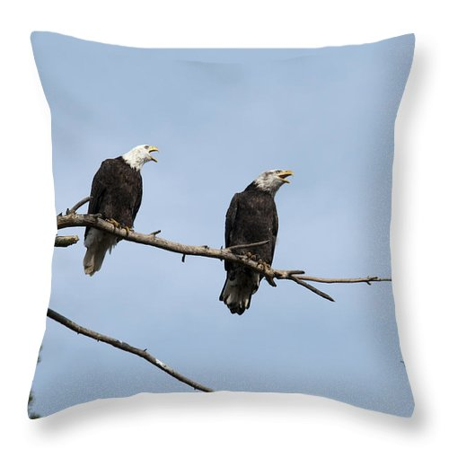 Bald Eagle Throw Pillow featuring the photograph Bald Eagle Perch by Chad Davis