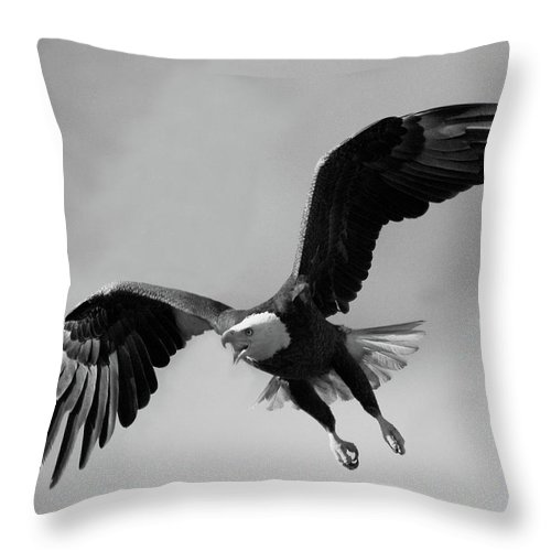 Eagles Throw Pillow featuring the photograph Bald Eagle Symbol Of Strength by Herbert L Fields Jr