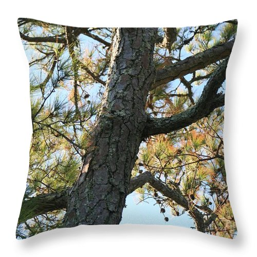 Tree Throw Pillow featuring the photograph Bald Head Tree by Nadine Rippelmeyer
