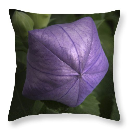 Balloon Flower Throw Pillow featuring the photograph Balloon Flower by Nancy Griswold