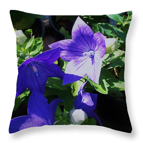 Landscapes Throw Pillow featuring the photograph Baloon Flower by Eric Schiabor