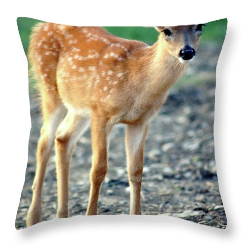 Faunagraphs Throw Pillow featuring the photograph Bambi2 by Torie Tiffany