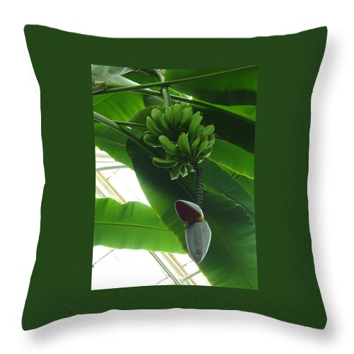 Kew Throw Pillow featuring the photograph Banana Plant Kew London England by Heather Lennox