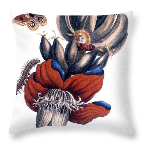 1726 Throw Pillow featuring the photograph Bananas (musa Paradisiaca): by Granger