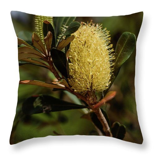 Coastal Banksia Throw Pillow featuring the photograph Banksia Syd01 by Werner Padarin