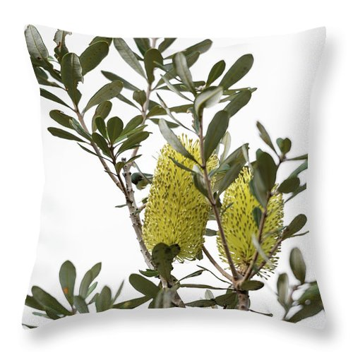 Coastal Banksia Throw Pillow featuring the photograph Banksia Syd02 by Werner Padarin