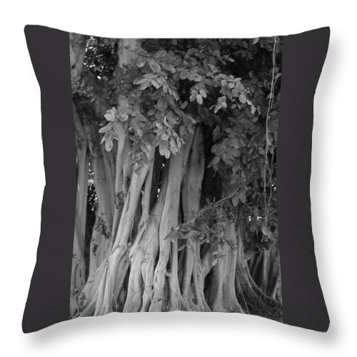 Throw Pillow featuring the photograph Banyans by Maria Bonnier-Perez