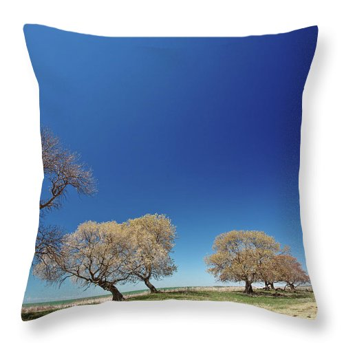 Bare Throw Pillow featuring the digital art Bare Trees Along Shore Of Lake Manitoba by Mark Duffy