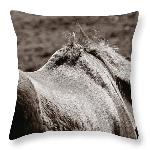 Horse Throw Pillow featuring the photograph Bareback by Angela Rath