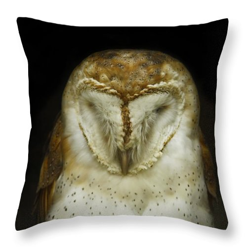 Barn Owl Throw Pillow featuring the photograph Barn Owl by Phill Doherty
