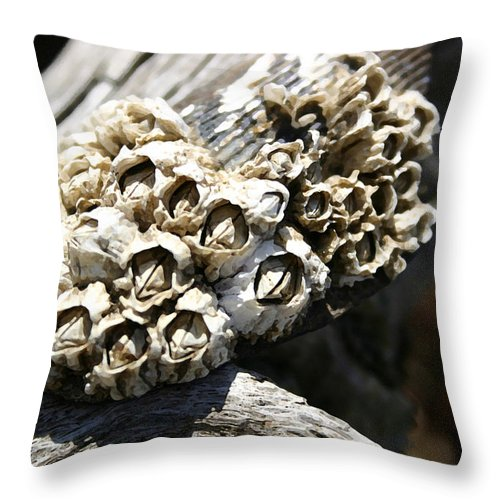 Shells Throw Pillow featuring the photograph Barnicles And Wood by Mary Haber
