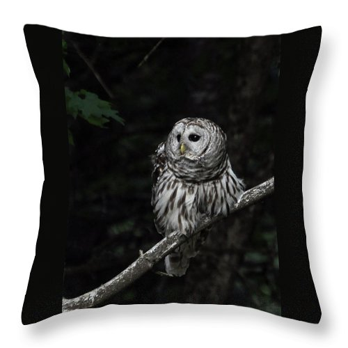 Owl Throw Pillow featuring the photograph Barred Owl 2 by Glenn Gordon