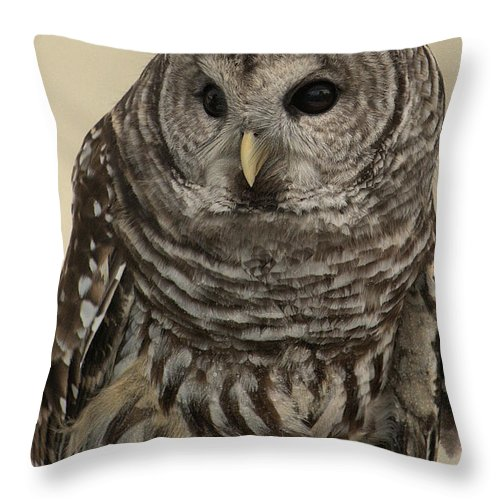 Barred Throw Pillow featuring the photograph Barred Owl by Michael Gordon