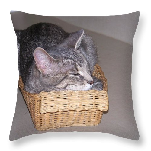 Cat Throw Pillow featuring the photograph Basket Time by Jackie Mueller-Jones