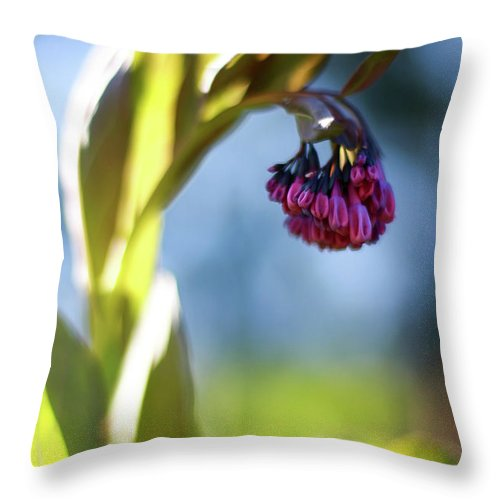 Botanical Throw Pillow featuring the photograph Basking Beauty by Martina Schneeberg-Chrisien