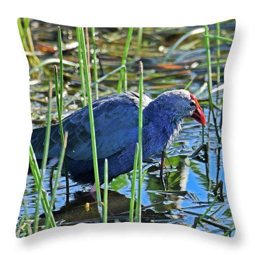 Purple Swamp Hen Throw Pillow featuring the photograph Bath Time by Sally Sperry