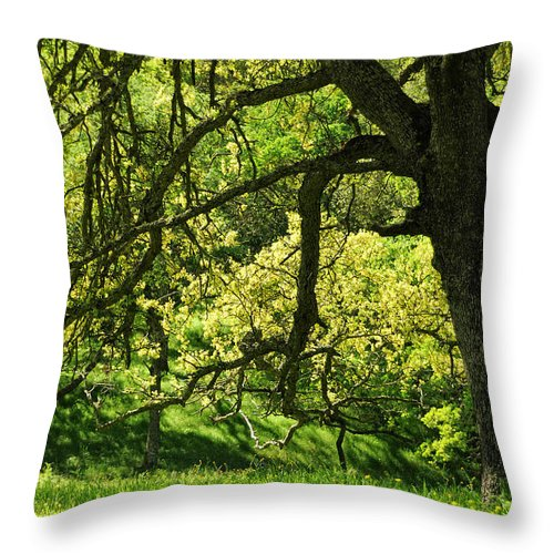Oak Tree Throw Pillow featuring the photograph Bathed In Spring by Donna Blackhall