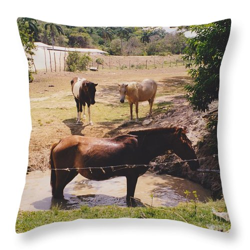 Horses Throw Pillow featuring the photograph Bathing Horse by Michelle Powell