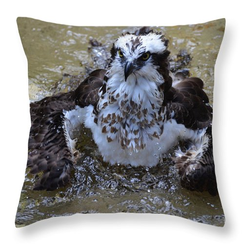 Bathing Throw Pillow featuring the photograph Bathing Osprey In Shallow Water by DejaVu Designs
