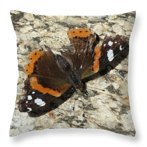 Butterfly Throw Pillow featuring the photograph Battered Butterfly by Valerie Ornstein