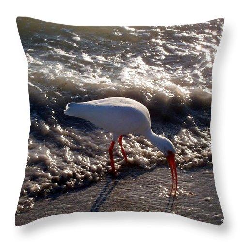Beach Throw Pillow featuring the photograph Beach Bird by Elizabeth Klecker