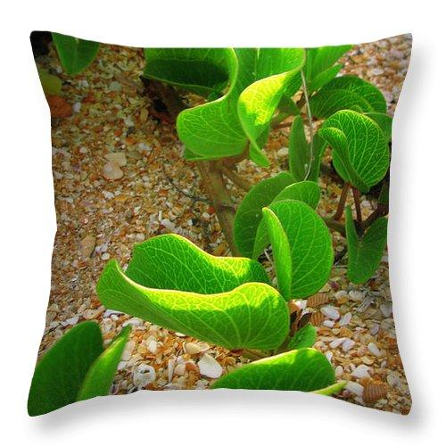 Beach Throw Pillow featuring the photograph Beachcomber by Mandy Shupp
