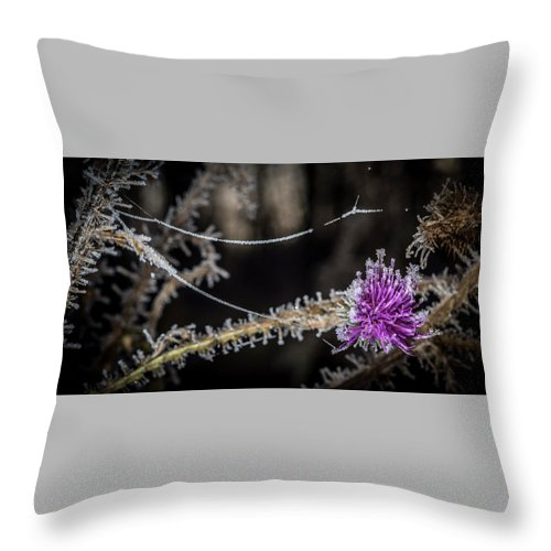 Thistle Throw Pillow featuring the photograph Beadwork by Annette Berglund