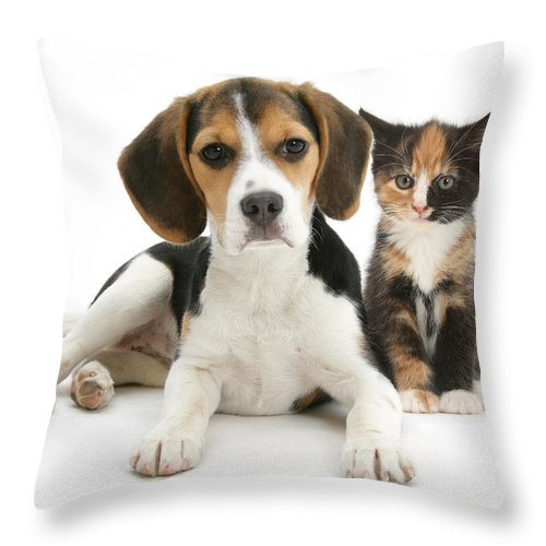 Animal Throw Pillow featuring the photograph Beagle And Calico Cat by Mark Taylor