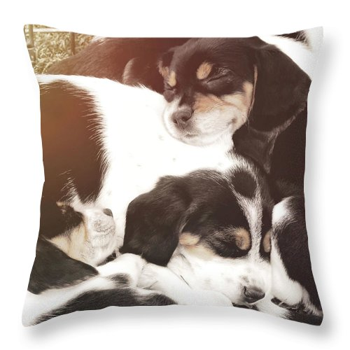 Dog Throw Pillow featuring the photograph Beagle Pile by JAMART Photography