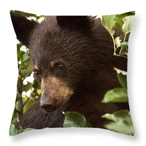 Black Bear Throw Pillow featuring the photograph Bear Cub In Apple Tree2 by Loni Collins