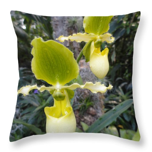 Orchids Throw Pillow featuring the photograph Bearded Ladies by Trish Hale