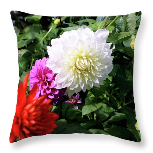 Outdoor Throw Pillow featuring the photograph Beautiful And Fresh Dahlias In The Butchrt Gardens,vancouver Island 1. by Andrew Kim