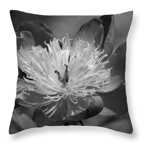 Peony Throw Pillow featuring the photograph Beautiful Anyway by Lori Tambakis