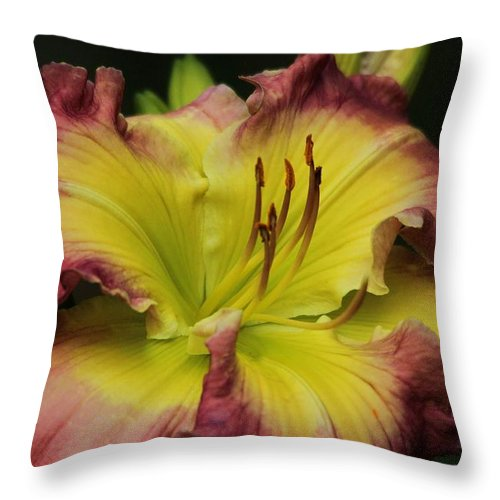 Flower Throw Pillow featuring the photograph Beautiful Bloom by Paulette Thomas