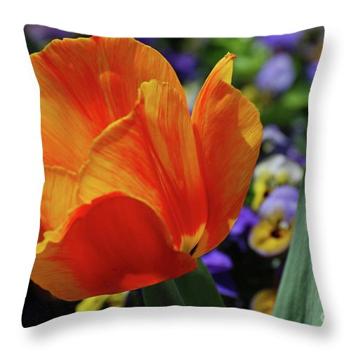 Tulip Throw Pillow featuring the photograph Beautiful Blooming Orange And Red Tulip Flower Blossom by DejaVu Designs