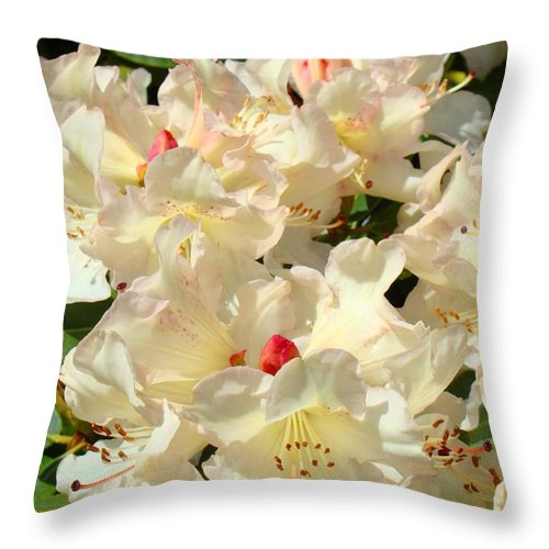 Beautiful Throw Pillow featuring the photograph Beautiful Creamy White Pink Rhodies Floral Garden Baslee Troutman by Baslee Troutman