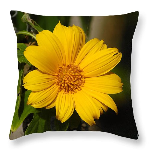 Yellow Throw Pillow featuring the photograph Beautiful In Yellow by David Lee Thompson