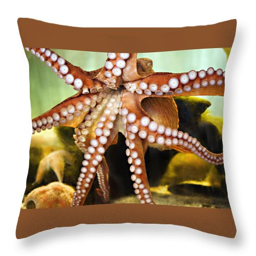 Octopus Throw Pillow featuring the photograph Beautiful Octopus by Marilyn Hunt