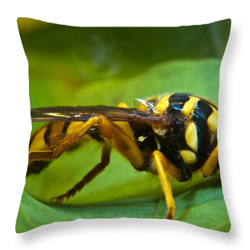 Beautiful Throw Pillow featuring the photograph Beautiful Syrphid by Douglas Barnett
