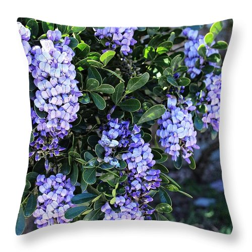 Photography Throw Pillow featuring the photograph Beautiful Tree by Ella Kaye Dickey