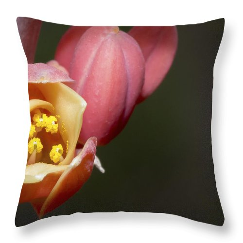 Beauty Throw Pillow featuring the photograph Beauty Emerges by Barbara Fagan Sullivan