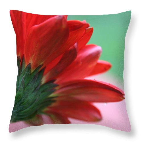 Flowers Throw Pillow featuring the photograph Beauty From Behind by Linda Sannuti