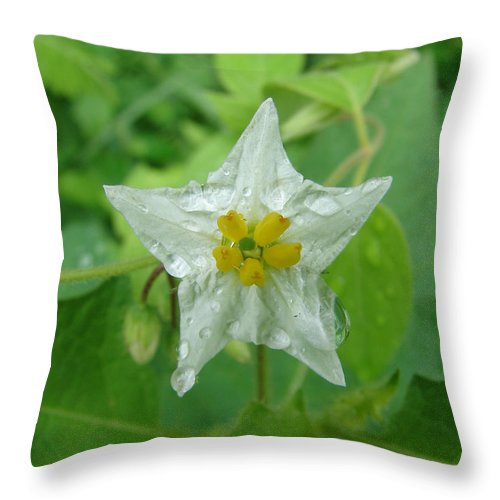 Green Flower White Water Drop Throw Pillow featuring the photograph Beauty In All Sizes by Luciana Seymour